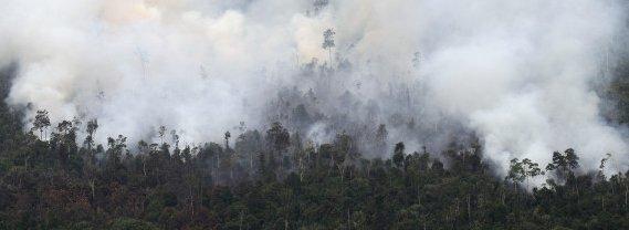 Bosbrand-indonesie 2015