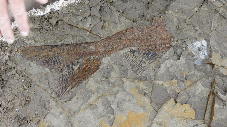 Meteoriet slachtoffers gevonden