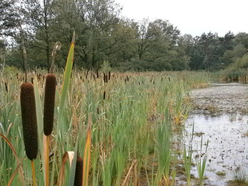 Nieuw Veen in Nederland