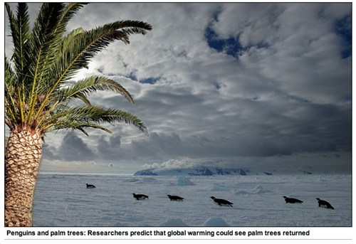 penguins_and_palm_trees_500x343