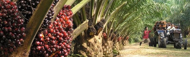 rameshoilmills-palmolie-e1352991598656