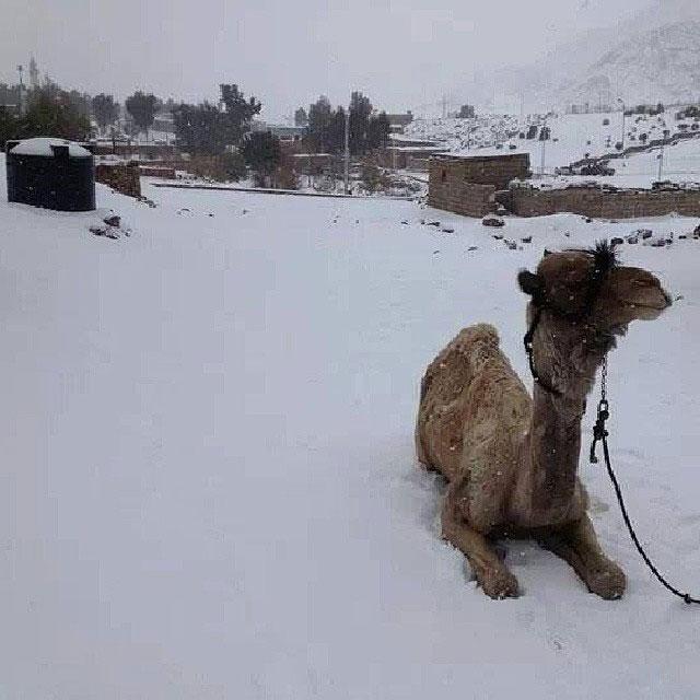 snow-in-cairo-egypt-december-2013-2